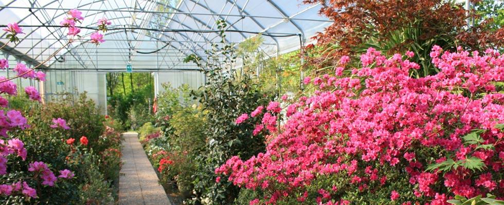 Vivaio piante udine progettazione giardini udine for Vivaio alberi