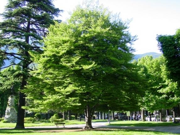 Vivaio piante udine progettazione giardini udine - Alberi da giardino sempreverdi da ombra ...