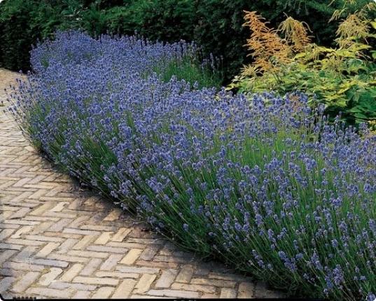 Arbusti e cespugli da fiore - Cespugli da giardino ...
