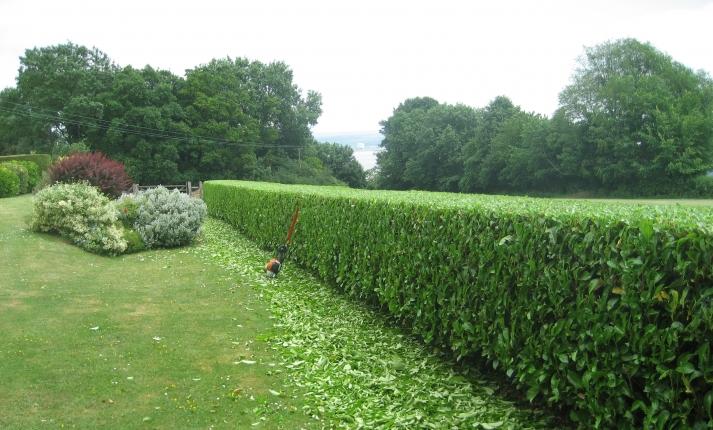 Vivaio piante udine progettazione giardini udine - Siepe di ulivo ...