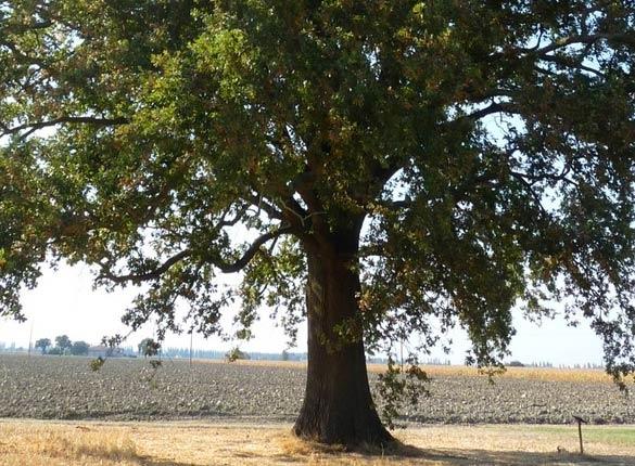 Vivaio piante udine progettazione giardini udine provincia e friuli venezia giulia - Foto di alberi da giardino ...