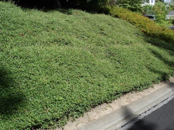 Vivaio piante udine progettazione giardini udine - Piante per coprire muri ...
