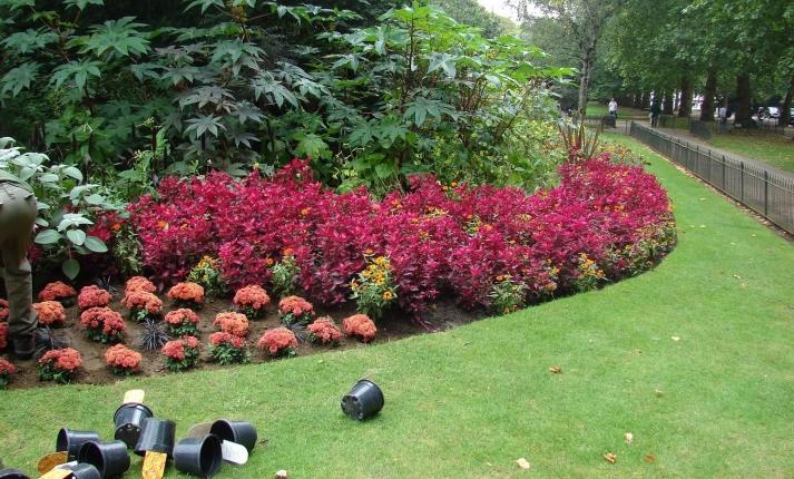 vivaio piante udine progettazione giardini udine