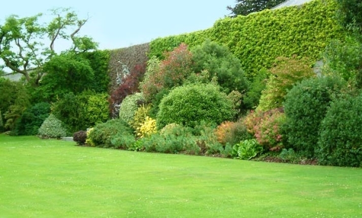 Vivaio piante udine progettazione giardini udine for Cespugli fioriti perenni da giardino